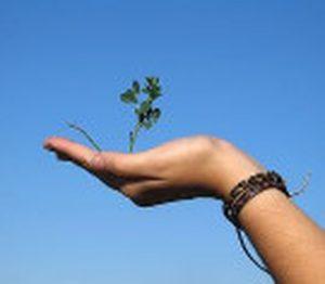 Hand die jou een plantje, een boompje aanreikt